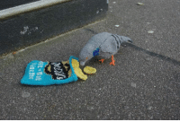 Fucking, Saw, and Tumblr: 2-shane-s:I thought that only the bag of chips was knitted so I was like lmaoo fucking idiot bird got owned then I saw that the bird was knitted as well then I realized I was the fucking idiot bird getting owned