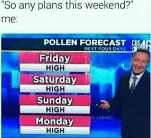 """Friday, Forecast, and Monday: 2  """"So any plans this weekend?""""  me:  POLLEN FORECAST CBSA  NEXT FOUR DAYS  Friday  HIGH  Saturday  HIGH  Sunday  HIGH  Monday  HIGH  f LMFAO"""
