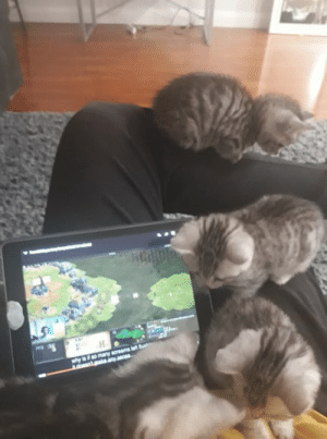 Cats, Kittens, and Never: 2  why le so many acreams let ush  adosatpakainy a Never use wololo on kittens (Not my leg nor my cats)