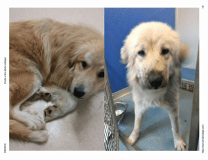 Our friends at Big Fluffy Dog Rescue need some help with these pups. Dunkin has made a donation to their costly care and ask you to consider the same. Regardless, please SHARE!: 20/2019  Create online photo collages  com  1/2 Our friends at Big Fluffy Dog Rescue need some help with these pups. Dunkin has made a donation to their costly care and ask you to consider the same. Regardless, please SHARE!