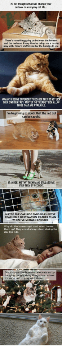 Cats, Life, and Rude: 20 cat thoughts that will change your  outlook on everyday cat life..  There's something going on between the humans  and the mailman. Every time he brings me a box to  play with, there's stuff inside for the humans to use.  HUMANS ASSUME SUPERIORITY BECAUSE THEY DO NOT LIC  THEIR OWN GENITALS, AND YET THEY READILY LICK ALL OF  THOSE THAT ARE AVAILABLE.  I'm beginning to doubt that the red dot  can be caught.  IT AMAZES ME THAT THE HUMANS STILLASSUME  ITRIP THEM BY ACCIDENT  MAYBE THE CAR RIDE ENDS WHEN WE'VE  REACHED A DESTINATION, RATHER THAN  WHEN I'VE MEOWED ENOUGH  Why do the humans get mad when I wake  them up? They could always sleep during the  day like I do.  Once a year the humans celebrate us by  hanging dangly shiny things from a tree  It's rude not to play with them <p>What Cats Are Really Thinking.</p>