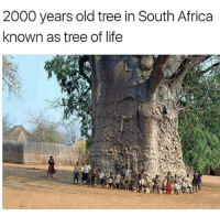Follow @black2business For more black women positivity and empowerment @black2business: 2000 years old tree in South Africa  known as tree of life Follow @black2business For more black women positivity and empowerment @black2business
