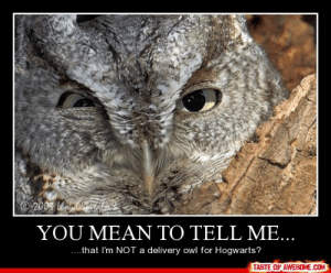 You Mean To Tell Me…http://omg-humor.tumblr.com: 200S o taha  YOU MEAN TO TELL ME...  ....that I'm NOT a delivery owl for Hogwarts?  TASTE OF AWESOME.COM You Mean To Tell Me…http://omg-humor.tumblr.com