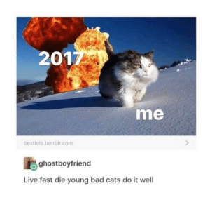 Bad, Cats, and Live: 201  me  bestiols.tumbir.com  ghostboyfriend  Live fast die young bad cats do it well With 2017 coming to an end