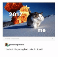 Bad, Cats, and Memes: 201  me  bestiols.tumblr.com  ghostboyfriend  Live fast die young bad cats do it well 🤣Tag a friend
