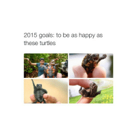 Animals, Anime, and Goals: 2015 goals: to be as happy as  these turtles should I finish akame ga kill or start a new anime?? I still haven't seen sao2 omg