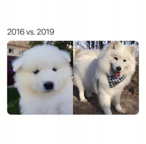 Animals, Dogs, and Memes: 2016 vs. 2019 Dog Memes Of The Day 30 Pics – Ep53 #animalmemes #dogmemes #memes #dogs - Lovely Animals World
