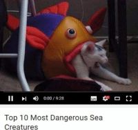 II 0:00 19:28  Top 10 Most Dangerous Sea  Creatures