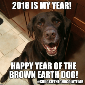 Happy Chinese New Year 2018 - Imgflip: 2018 IS MY YEAR!  HAPPY YEAR OF THE  BROWN EARTH DOG!  #CHUCKETHECHOCOLATELAB  imgflip.com Happy Chinese New Year 2018 - Imgflip