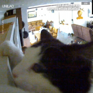 """Dank, Saw, and Camera: 2019  190tanalert that soO  ampering with my security c  UNILAD  NEWSFLARE """"I got an alert saying someone has tampered with my security camera and this is what I saw..."""" 😂🐱"""