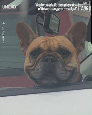 """Today is a good day... 😍""  CONTENTbible: 2019  ""Captured this life changing video  of this cute doggo at ared light"" 