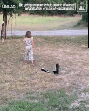 """Animals, Dank, and Moms: 2019  Thegirl's grandparents help animals who need  UNILAD  JUL  rehabilitation, whichis why this happens.  PARTYGETSME """"This little girl near my mom's house always walks passed with a random animal combo following her"""" 😍😍"""