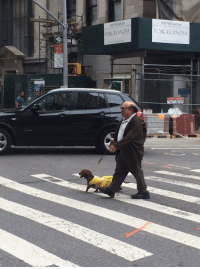 Avenue, Danny Devito, and Dog: 202 Fifth Avenue  202 Fifth Avenue  PORCELANOSA  PORCELANOSA  ON Danny DeVito walking his dog