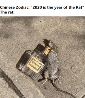 2020 should have been year of the bat.: 2020 should have been year of the bat.