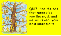 Quiz, One, and Will: 21  QUIZ: find the one  that resembles  you the most, and  we will reveal your  most inner traits  17  15  18 7016  10  11 12  13
