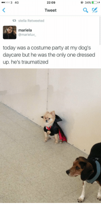 Dogs, Party, and Best: 22:09  Tweet  t stella Retweeted  mariela  @marieluv  today was a costume party at my dog's  daycare but he was the only one dressed  up. he's traumatized <p>still the best thing i have ever seen</p>