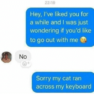 Memes, Sorry, and Keyboard: 22:19  Hey, I've liked you for  a while and I was just  wondering if you'd like  to go out with me  No  Sorry my cat ran  across my keyboard