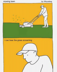 Jim's Memeing: mowing lawn  CO  I can hear the grass screaming  by: filthyratbag Jim's Memeing
