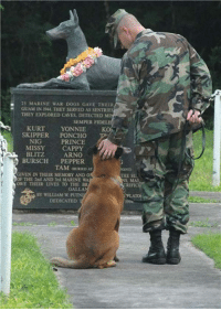 "Dogs, Meme, and Prince: 25 MARINE WAR DOGS GAVE THEIR  GUAM IN 1944 THEY SERVED AS SENTRIES  THEY EXPLORED CAVES, DETECTED MI  SEMPER FIDE  KURT  YONNIE  SKIPPER PONCHO  PRINCE  CAPPY  KO  NIG  MISSY  ARNO  BURSCH PEPPER  TAM auRIED AT  GIVEN IN THEIR MEMORY AND O  OF THE 2nd AND 3rd MARINE WA  THE SU  MA  IFIC  OWE THEIR LIVES TO THE BR  GALLA  BY WILLIAM W PUTN  DEDICATED  1994 <p>Taken At The US Marine's War Dog Memorial.<br/><a href=""http://daily-meme.tumblr.com""><span style=""color: #0000cd;""><a href=""http://daily-meme.tumblr.com/"">http://daily-meme.tumblr.com/</a></span></a></p>"