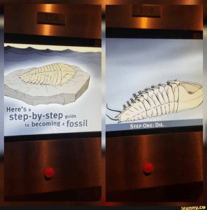 Fossil, Step, and One: 2518  2518  Here's a  step-by-step guide  becoming a fossil  to  STEP ONE: DIE.  ifunny.co