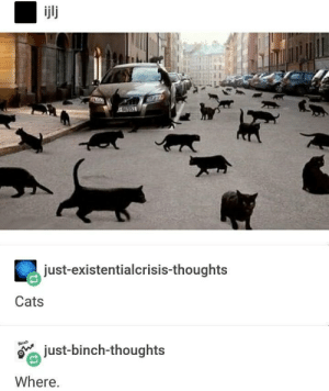 I dont see em: 253  just-existentialcrisis-thoughts  Cats  just-binch-thoughts  Where. I dont see em