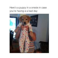 Bad, Bad Day, and Puppies: Here's a puppy in a onesie in case  you're having a a bad day 🆒