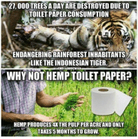 Memes, Tiger, and World: 27, 000 TREESA DAY ARE DESTROYED DUE TO  TOILET PAPER CONSUMPTION  ENDANGERINGRAINFOREST INHABITANTS  LIKE THE INDONESIAN TIGER.  WHY NOT HEMP TOILET PAPER?  NDTHIDRUCWAR  HEMP PRODUCES 4X THEPULP PERACREAND ONLY  TAKES 5 MONTHS TO GROW. hemp can better our world