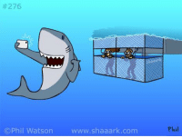 Memes, Shark, and Cartoon:  #276  C Phil Watson  www.shaaark.com  Phil A new #Shaaark cartoon, inspired by my recent cage dive with Great White sharks.