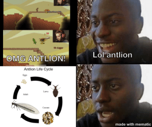 The more you learn: 28  Coppor  Lol antlion  OMG ANTLION!  Antlion Life Cycle  Eggs  Larva  Adult  Сосооn  made with mematic The more you learn