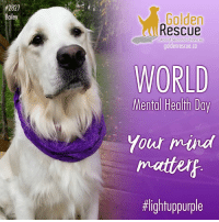 Family, Friends, and Halloween:  #2827  aile  Golden  Rescue  goldenrescue.co  About Second Chances  WORLD  Mental Health Day  Yout miva  mattertf  In support of #WorldMentalHealthDay learn how you can get involved. http://www.lightuppurple.com/get-involved.html  • Wear purple today • Purple balloons • Purple waterproof LED fairy lights in rooms or outside the house • Wear purple glow stick necklaces or bracelets • Change indoor and/or outdoor lights to purple bulbs.  Black lights glow purple.  These purple lights are available in October at many stores in preparation for Halloween. • Take a selfie or a group photo holding a #lightuppurple or #worldmentalhealthday sign • Talk to your family and friends about mental health issues • Talk to at least 5 people about World Mental Health Day  #letstalk #purple #lightuppurple #lup