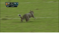 Memes, Squirrel, and 🤖: 2ND  10:09  :40  1ST& 10 SQUIRREL!   On the field in Philly! #MIAvsPHI https://t.co/ROWvWzfJqA