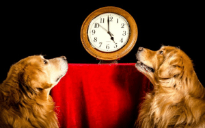 Memes, Golden Retriever, and Spring: 3  2.4  2  2  6 SPRING FORWARD!  Don't forget to fast forward those clocks by one hour!  Hopefully your pooch let you sleep in an extra hour due to a darker wake-up hour.   Please share a photo of how your Golden Retriever is enjoying the day!