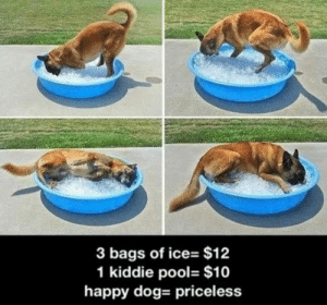 lolzandtrollz:The Low Price Of Happiness: 3 bags of ice- $12  1 kiddie pool- $10  happy dog- priceless lolzandtrollz:The Low Price Of Happiness