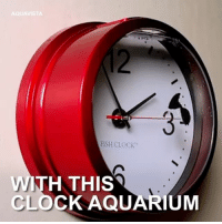 Clock Aquarium got me like 😍👏🏼 (via @intheknowbyaol) aquavista clockaquarium fishbowl fish 📢 Share the knowledge! Tag your friends in the comments. ➖➖➖➖➖➖➖➖➖➖➖ Want more Did You Know(s)? ➡📓 Buy our book on Amazon: [LINK IN BIO] ➡📱 Download our App: http:-apple.co-2i9iX0u ➡📩 Get daily text message alerts: http:-Fact-Snacks.com ➡📩 Free email newsletter: http:-DidYouKnowFacts.com-Sign-Up- ➖➖➖➖➖➖➖➖➖➖➖ We post different content across our channels. Follow us so you don't miss out! 📍http:-facebook.com-didyouknowblog 📍http:-twitter.com-didyouknowfacts ➖➖➖➖➖➖➖➖➖➖➖ DYN FACTS TRIVIA TIL DIDYOUKNOW NOWIKNOW: 3:  FISH CLOCK  WITH THIS  CLOCK AQUARIUM Clock Aquarium got me like 😍👏🏼 (via @intheknowbyaol) aquavista clockaquarium fishbowl fish 📢 Share the knowledge! Tag your friends in the comments. ➖➖➖➖➖➖➖➖➖➖➖ Want more Did You Know(s)? ➡📓 Buy our book on Amazon: [LINK IN BIO] ➡📱 Download our App: http:-apple.co-2i9iX0u ➡📩 Get daily text message alerts: http:-Fact-Snacks.com ➡📩 Free email newsletter: http:-DidYouKnowFacts.com-Sign-Up- ➖➖➖➖➖➖➖➖➖➖➖ We post different content across our channels. Follow us so you don't miss out! 📍http:-facebook.com-didyouknowblog 📍http:-twitter.com-didyouknowfacts ➖➖➖➖➖➖➖➖➖➖➖ DYN FACTS TRIVIA TIL DIDYOUKNOW NOWIKNOW
