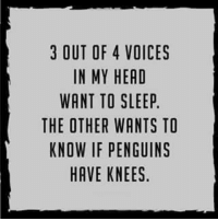 voices in my head: 3 OUT OF 4 VOICES  IN MY HEAD  WANT TO SLEEP.  THE OTHER WANTS TO  KNOW IF PENGUINS  HAVE KNEES.