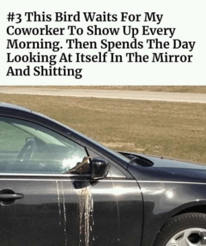 #funny #memes #humor #lol #meme #jokes #funnymemes #fun #lmao #pictures:  #3 This Bird Waits For My  Coworker To Show Up Every  Morning. Then Spends The Day  Looking At Itself In The Mirror  And Shitting #funny #memes #humor #lol #meme #jokes #funnymemes #fun #lmao #pictures