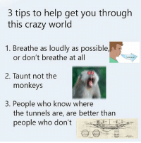 Crazy, Memes, and Help: 3 tips to help get you through  this crazy world  1. Breathe as loudly as possible,  or don't breathe at all  wheeze  2. Taunt not the  monkeys  3. People who know where  the tunnels are, are better than  people who don't Always remember these rules @welcometomymemepage