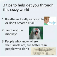 Crazy, Help, and World: 3 tips to help get you through  this crazy world  1. Breathe as loudly as possible,  or don't breathe at all  wheeze*  2. Taunt not the  monkeys  3. People who know where  the tunnels are, are better than  people who don't