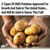 "3 Types of GMO Potatoes Approved For  Growth And Sale In The United States...  And Will Be Sold In Stores This Fall!  ugly by nature  UGLY This is why Dr.Sebi does NOT recommend potatoes(except the red potato)they are Hybrids,man made,starch.According to federal officials, these three types of genetically engineered potatoes are able to resist the pathogen that caused the Irish potato famine. Officials say that they are safe for the environment and safe to eat, yet there has not been enough testing for this claim to be proven.The U.S. Environmental Protection Agency and Food and Drug Administration gave Idaho-based J.R. Simplot Co. permission to plant the potatoes this spring and sell them in the fall. The company claims that the potatoes contain only potato genes and that the resistance to late blight, the disease that caused the Irish potato famine, comes from an Argentine variety of potato that naturally produced a defense. Changing the genetic code of foods presents ethical and health issues for many people, farmers, and companies alike.These three new varieties of potato – the Russet Burbank, Ranger Russet, and Atlantic – have been approved by the U.S. Department of Agriculture. According to Simplot spokesman Doug Cole, the potatoes have the same taste, texture, and nutritional qualities as conventional potatoes. The company said these GMO potatoes will have reduced bruising and black spots, enhanced storage capacity and a lower amount of the chemical that is a potential carcinogen.Potatoes are the fourth staple crop in the world behind corn, rice, and wheat.The Non-GMO Project, which opposes GMOs and verifies non-GMO food and products, said the new potatoes don't qualify as non-GMO. ""There is a growing attempt on the part of biotechnology companies to distance themselves from the consumer rejection of GMOs by claiming that new types of genetic engineering … are not actually genetic engineering,"" the Washington state-based group said in a statement.Source: http:-livetheorganicdream.com-three-genetically-modified-potatoes-just-approved-u-s- blackhealth blackhealthmatters gmo potatoes manmade"