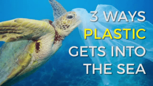 Animals, Future, and Gif: 3 WAYS  PLASTIC  GETS INTO  THE SEA beesaltybeesweet:  the-sea-lovers:  HELP US TO SAVE OCEAN  MARINE ANIMALS  🌊🐋The role plastic products play in the daily lives of people all over the world is interminable. We could throw statistics at you all day long (e.g. Upwards of 300 MILLION tons of plastic are consumed each year), but the impact of these numbers border on inconceivable.For those living on the coasts, a mere walk on the beach can give anyone insight into how staggering our addiction to plastic has become as bottles, cans, bags, lids and straws (just to name a few) are ever-present. In other areas that insight is more poignant as the remains of animal carcasses can frequently be observed; the plastic debris that many of them ingested or became entangled in still visible long after their death. Sadly, an overwhelming amount of plastic pollution isn't even visible to the human eye, with much of the pollution occurring out at sea or on a microscopic level.The short-lived use of millions of tons of plastic is, quite simply, unsustainable and dangerous. We have only begun to see the far-reaching consequences of plastic pollution and how it affects all living things. According to a study from Plymouth University, plastic pollution affects at least 700 marine species, while some estimates suggest that at least 100 million marine mammals are killed each year from plastic pollution.Here are some of the marine species most deeply impacted by plastic pollution.Sea TurtlesSeals and Sea LionsSeabirdsFishWhales and Dolphins– GET KEEP OUR OCEAN BLUE T-SHIRT HERE –– GET THE BABY WHALE EARRINGS HERE –– GET PROTECT OUR OCEAN T-SHIRT HERE –– GET THE BLUE MERMAID TAIL NECKLACE HERE –– GET THE WAVE BANGLE BRACELET HERE –– GET THE 10 PACK COLORFUL OCEAN NECKLACES HERE –– GET THE MERMAID TAIL NECKLACE HERE –– GET THE BLUE MERMAID TAIL EARRINGS HERE –– GET THE WAVE RING HERE –– GET THE WAVE EARRINGS HERE –– GET THE MERMAID TAIL NECKLACE HERE –– GET THE 7 PACK GOLD NECKLACES HERE –– GET THE WAVE NECKLACE HERE –– GET SAVE THE WORLD UNISEX T-SHIRT HERE –Our causeEvery second, 206 kg of plastic waste end up in the world's oceans. At The Sea Lovers, we want the future generation of surf lovers to have the opportunity to discover the amazing spots that nature has given us.We dream about oceans and beaches without waste, and want to contribute to it. By purchasing on our website, you help reducing marine litter. Indeed, Every year 15% of our profits are given back to organizations that fight for the protection of oceans.  So Incredibly Important 👏🏻👏🏻👏🏻