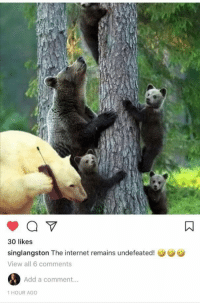 """Blackpeopletwitter, Internet, and Undefeated: 30 likes  singlangston The internet remains undefeated!  View all 6 comments  Add a comment...  1 HOUR AGO <p>""""This is bearly even acceptable…!"""" (via /r/BlackPeopleTwitter)</p>"""