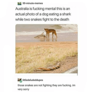I posted something from Reddit, then it gets to r/tumblr and now im stealing my meme back: 30-minute-memes  Australia is fucking mental this is an  actual photo of a dog eating a shark  while two snakes fight to the death  littledeludeddupes  those snakes are not fighting they are fucking. im  very sorry I posted something from Reddit, then it gets to r/tumblr and now im stealing my meme back