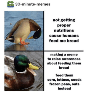 Frozen, Meme, and Memes: 30-minute-memes  not getting  proper  nutritions  cause humans  feed me bread  making a meme  to raise awareness  about feeding them  bread  feed them  corn, lettuce, seeds  frozen peas, oats  instead don't feed me bread!!