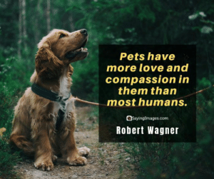 30 Pet Quotes on Love That Has No Boundaries #petquotes #quotes #sayingimages: 30 Pet Quotes on Love That Has No Boundaries #petquotes #quotes #sayingimages