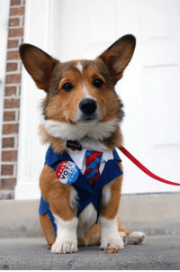 Adorable Dogs Are Suiting Up Like Presidential Politicians for Election Day ~Athena #DogForPresident   http://www.mymodernmet.com/profiles/blogs/dog-for-president: 310>  ililiILBE SADE Adorable Dogs Are Suiting Up Like Presidential Politicians for Election Day ~Athena #DogForPresident   http://www.mymodernmet.com/profiles/blogs/dog-for-president
