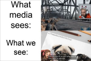 Media is stinky smöl pp: 32 ALIVE  What  media  sees:  u/Camehereforfelix  What we  see:  that's so cute oh my god came here for  Felix that's so adorable Media is stinky smöl pp