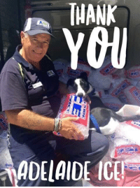 Adelaide Ice - You're cool!  Our fabulous friends at Adelaide Ice have once again offered their services to the more than 80 animals currently in our care by donating another whopping 100 bags of ice!  Shelter animals just like 6-month old Arlo here were over the moon at this afternoon's delivery.  So once again, a HUGE thank you to the Adelaide Ice team - you have made SO many animals very happy!  To those at home, don't forget to keep your pet's cool - hints and tips here: http://bit.ly/2iB6QuR: 33E  3aa  THANK  ADELAIDE ICE  ews Adelaide Ice - You're cool!  Our fabulous friends at Adelaide Ice have once again offered their services to the more than 80 animals currently in our care by donating another whopping 100 bags of ice!  Shelter animals just like 6-month old Arlo here were over the moon at this afternoon's delivery.  So once again, a HUGE thank you to the Adelaide Ice team - you have made SO many animals very happy!  To those at home, don't forget to keep your pet's cool - hints and tips here: http://bit.ly/2iB6QuR