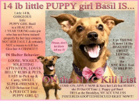9/11, Apparently, and Beautiful: 363100  14 lb little PUPPY girl Basil IS.  Little 14 lb,  GORGEOUS  little  PUPPY GIRL Basil  is a HEALTHY,  1 YEAR YOUNG cutie-pie  who has not been trained  properly by her lazy owners.  NOT HER FAULT & certainly  NOT a reason to kill her.  Give her A CHANCE!!!  1 yr YOUNG  A mere 14 lbs  BEAUTIFUL  SWEET  LOVING  ON  the  NYC KILL List  Please, don'  let them  kill me !!!  IN Shelter Behavior  LOOSE, WIGGLY,  SOLICITING  ATTENTION, LOVES  BELLY RUBS & PETS  EASY to Pick up &  Carry, SWEET,  SUPER-FRIENDLY  ACED Behavior Eval...  A PERFECT little  HELP !!!  Kill List  COME ON, APPLY NOW & Save her Life but HURRY  she IS Out Of Time :. Puppy gal Basil  DIES at the Brooklyn, NY ACC UNLESS  FOSTERED/ADOPTED/RESCUED RIGHT NOW!!!  PUPPY GIRL CO ***** To Be KILLED 9/21/18 in NYC *****  Little 14 lb, GORGEOUS little PUPPY GIRL Basil is a HEALTHY, 1 year YOUNG cutie-pie who has not been trained properly by her lazy owners. NOT HER FAULT & certainly NOT a reason to kill her. Give her A CHANCE!!! Care Center Behavior: LOOSE, WIGGLY, SOLICITING ATTENTION, LOVES BELLY RUBS & PETS, EASY to Pick up & Carry, SWEET, SUPER-FRIENDLY, ACED Behavior Eval... A PERFECT little PUPPY <3 COME ON, APPLY NOW to make her yours but HURRY, she IS Out Of Time :(. Puppy gal Basil DIES at the Brooklyn, NY ACC UNLESS RESERVED/FOSTERED/ADOPTED/RESCUED RIGHT NOW!!!  ****************************************** To FOSTER or ADOPT little puppy girl Basil, SPEAK UP NOW & Save a Life, APPLY with rescues OR message Must Love Dogs - Saving NYC Dogs IMMEDIATELY!!!! ******************************************  The general rule is to foster you have to be within 4 hours of the NYC ACC approved New Hope partner rescues you are applying with and to adopt you will have to be in the general NE US area; NY, NJ, CT, PA, DC, MD, DE, NH, RI, MA, VT & ME (some rescues will transport to VA). ✔Pledge✔Tag✔Share✔Foster✔Adopt✔Save a life! Thank you for caring! ================================