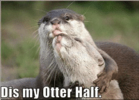 heart emoticon heart emoticonsmile emoticon Follow Sun Gazing: Dis my Otter Halt. heart emoticon heart emoticonsmile emoticon Follow Sun Gazing