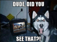 Dude, Ups, and Pets: DUDE, DID  YOU  SEE THAT?! Pet's and BMX #3 It's late. Why are you up? ~YaBoyWalte`